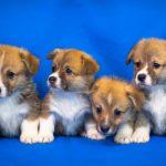 ペット・動物トラブルに関する内容証明