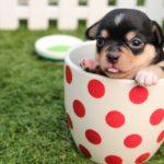 ペットの医療過誤(医療ミス・医療事故)に対する慰謝料請求