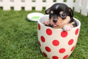 ペットの医療ミス時の慰謝料請求内容証明