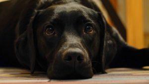 ペット・動物トラブルに関する内容証明の雛形と文例