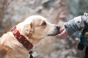 犬の怪我に関する内容証明郵便