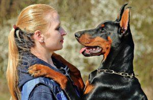 犬に噛まれた場合の慰謝料請求のための内容証明