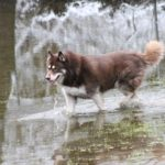 犬に噛まれた場合の損害賠償請求の雛形とサンプル