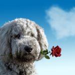 犬の咬傷事故に対する損害賠償請求の雛形とサンプル
