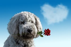 犬の咬傷事故に対する損害賠償請求の雛形と例文